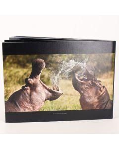 Album foto softcover, landscape, 15x20, 25 file (50-60 poze)